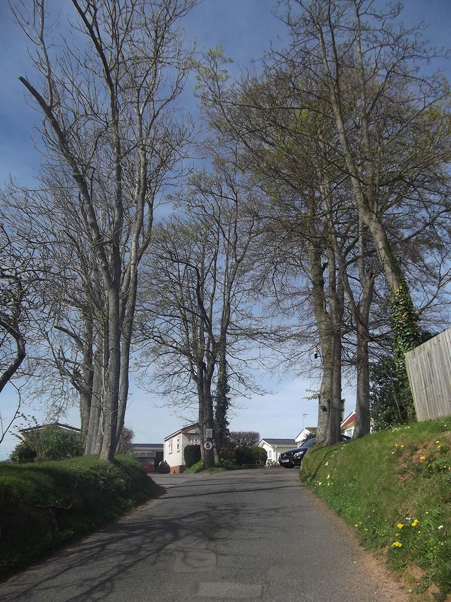 Ringswell Park